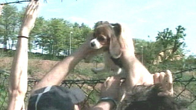 A beagle puppy is lifted through a fence