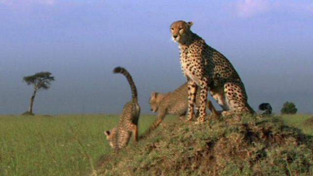 How to film amazing wildlife