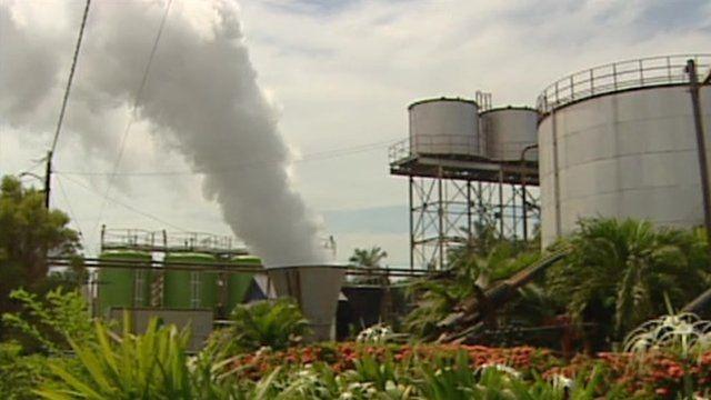 A palm oil production plant