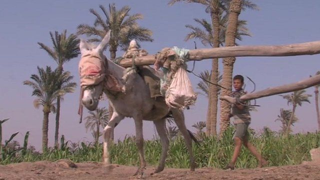 Donkey and rural worker