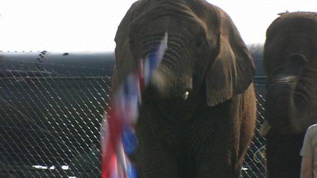 Elephant with union jack