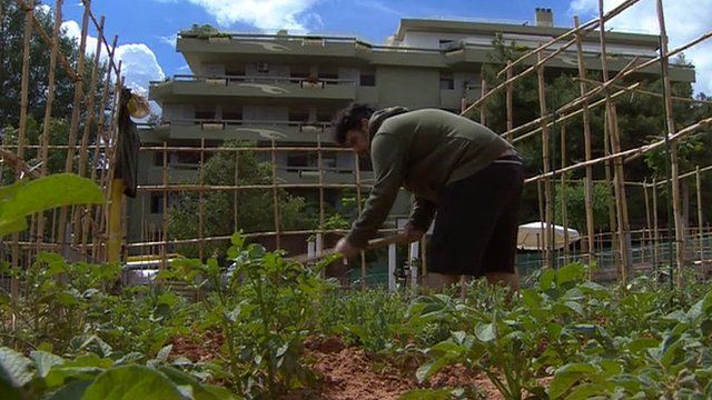 Greek working in an allotment
