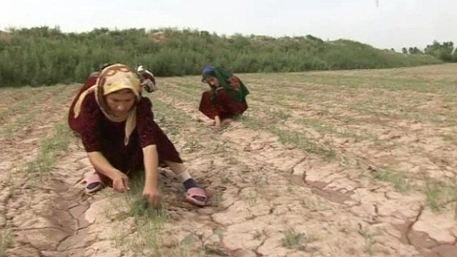 Women farmers in the southern town of Toos.