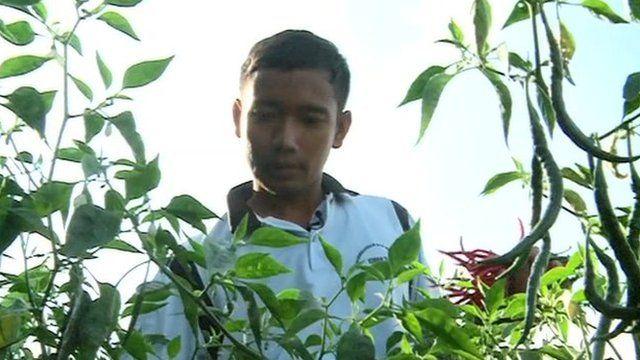 Indonesian farmer