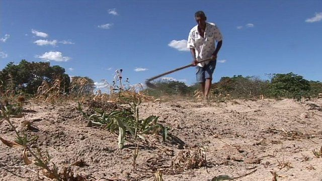 A farmer affected by the drought