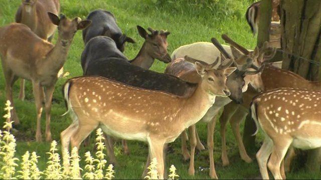 Deer in park