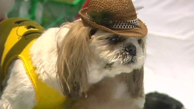 A dog in hat