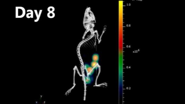 CT scan of mouse