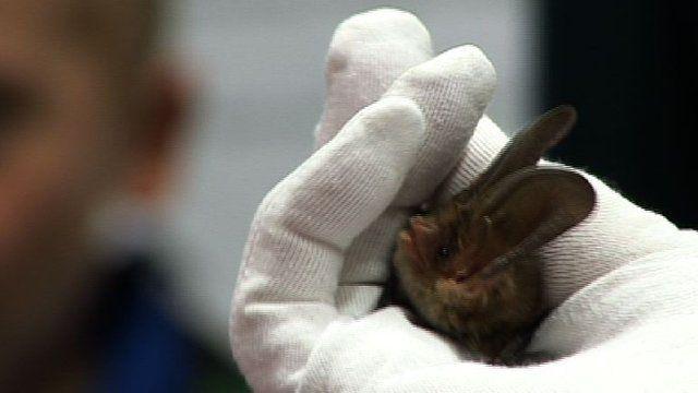 Bat being held