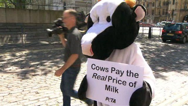 Protester dressed as a cow