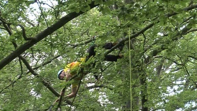 Alistair Magee climbing a tree