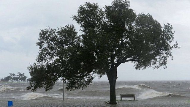 Tree and big waves