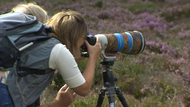 Sally Pepper photographing grouse in Derbyshire