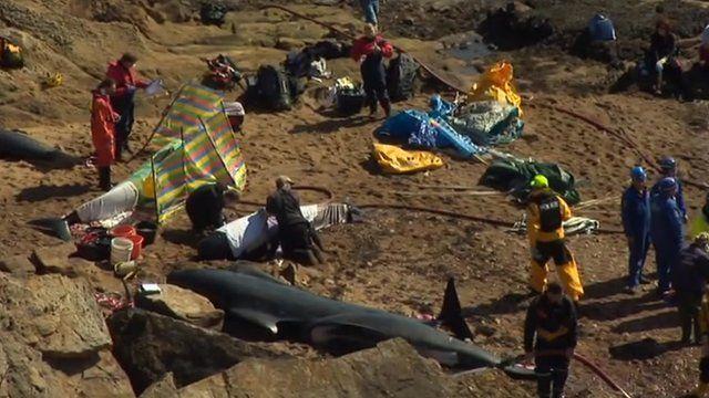 Rescuers at scene in Fife