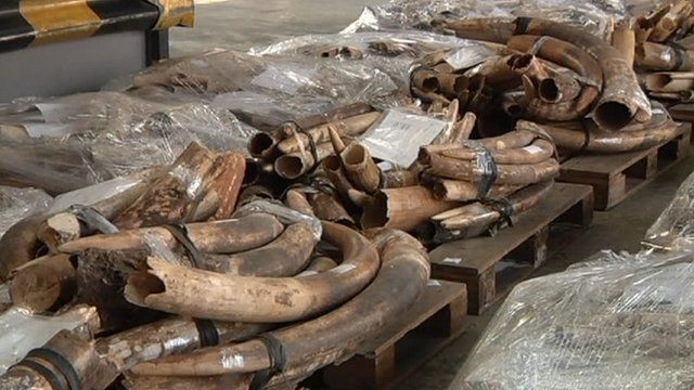 Ivory seized in Hong Kong