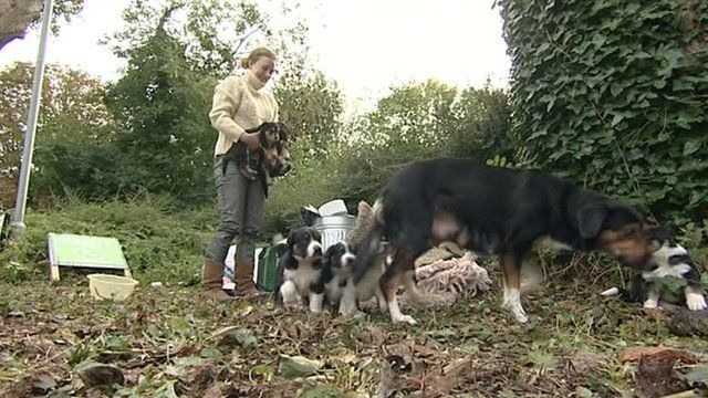 Lottie, who is homeless and lives underneath the bridge in Oxford with her dogs