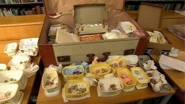 The eggs were kept in a suitcase in plastic containers