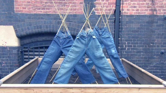 Jeans in a seed pod