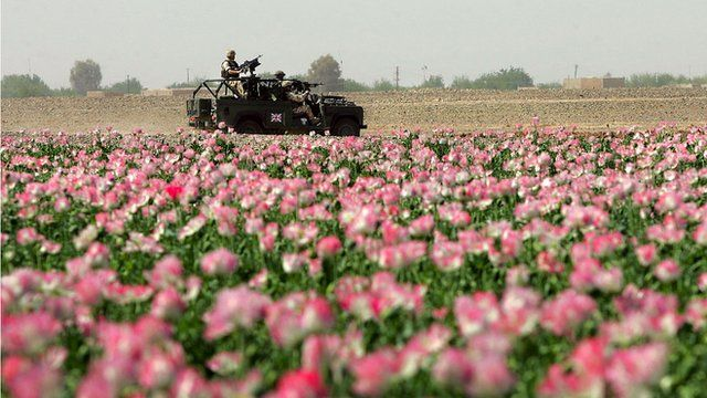 Soldiers in poppy field in Helmand Province