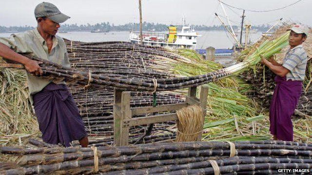 Burmese workers unload sugar cane