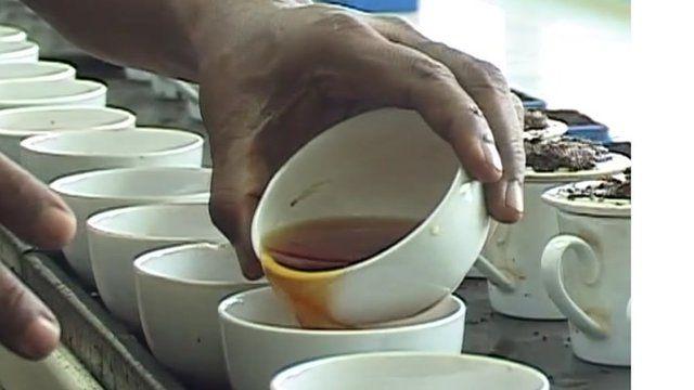 Tea tasting in Sri Lanka