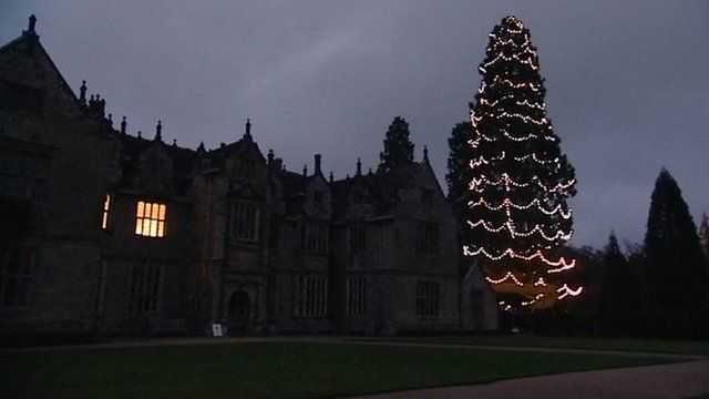Christmas tree at Wakehurst Place