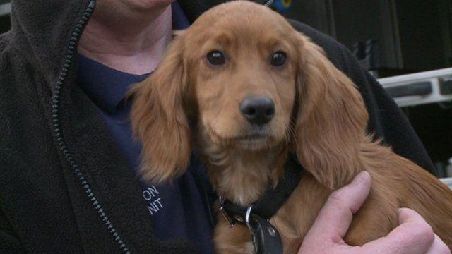 Murphy the puppy