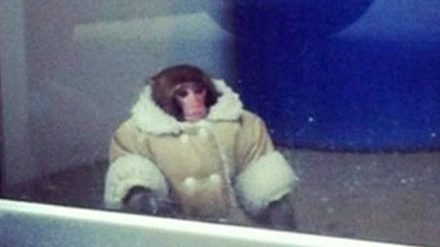 Photo of monkey at furniture store