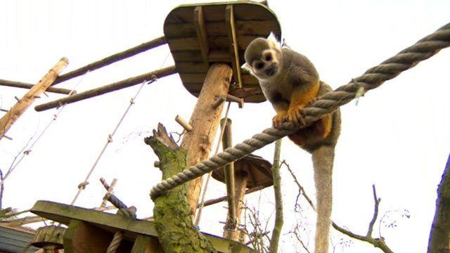 Animals at Yorkshire Wildlife Park