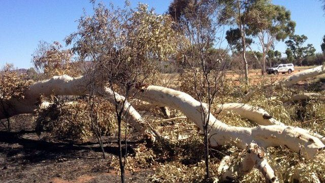 "Remains of ""Ghost Gum"" trees, painted many times by the late Aboriginal artist Albert Namatjira"
