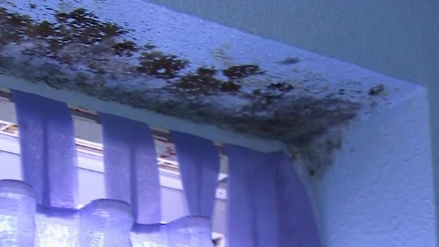 Mould above a window