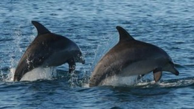 Brazil dolphin is first new river species since 1918