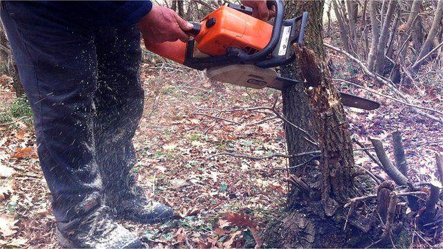 Wood cutter illegally cuts down a tree near Katerini. Jan 2013