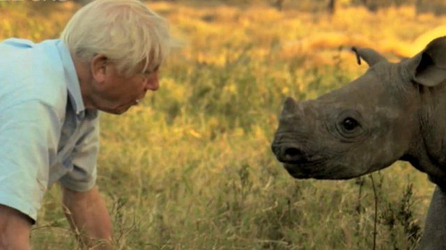 Sir David Attenborough with baby rhino