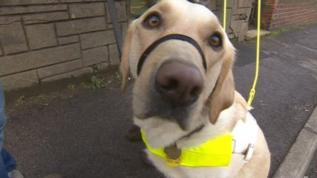 More than 30 people are waiting for guide dogs in Derbyshire and Nottinghamshire