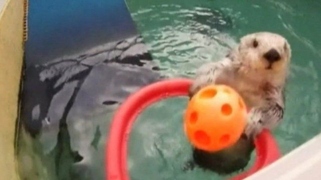 Eddie the otter playing basketball