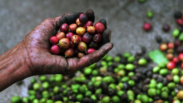 A woman holds coffee beans