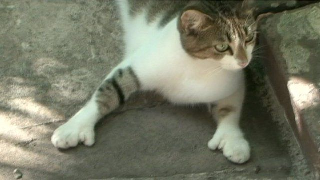 A cat in Ernest Hemingway's house