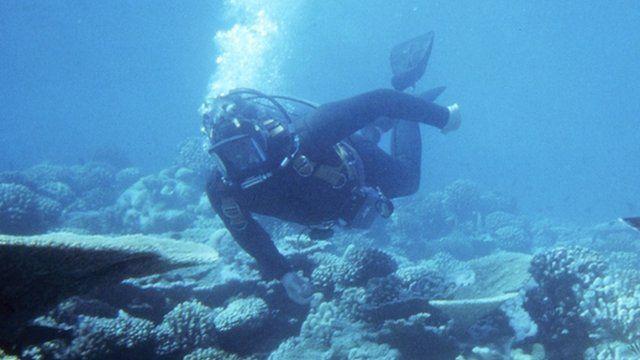David Attenborough deep sea diving