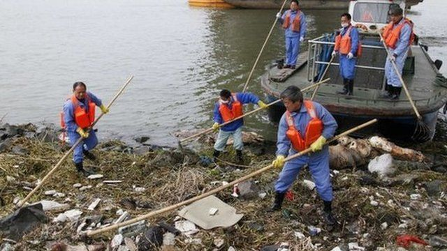 Cleaning workers retrieve the carcasses of pigs