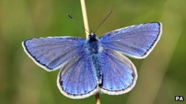 Butterflies suffered in cold and wet 2012, says charity