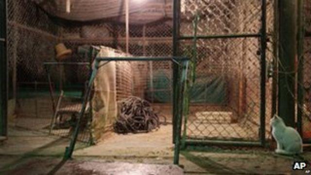 China steps up bird flu precautions
