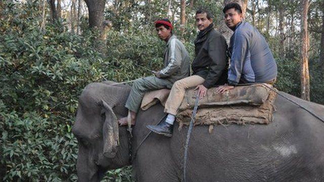 The BBC's Anbarasan Ethirajan on an an anti-poaching elephant patrol in the Chitwan national park