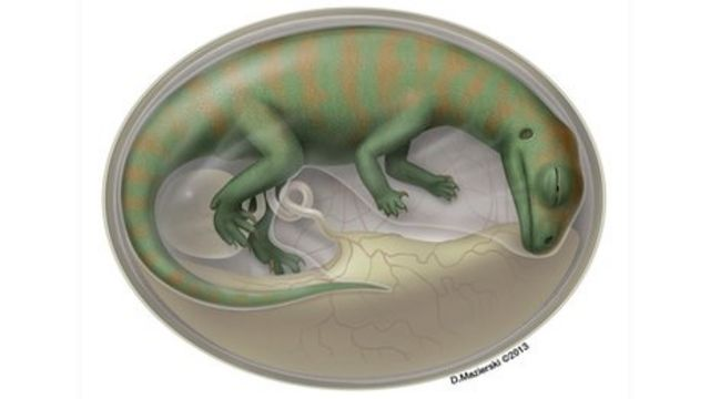 Dinosaur embryo fossils reveal life inside the egg