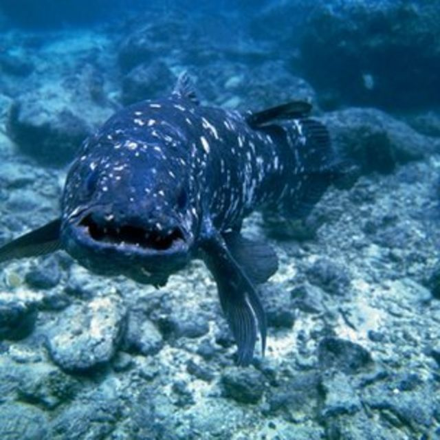 'Living fossil' coelacanth genome sequenced