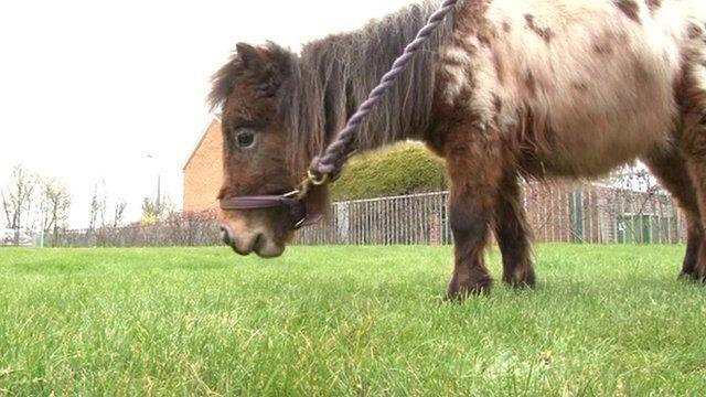 Abandoned pony