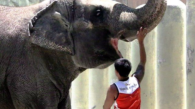 The 39-year-old female elephant being fed by a zookeeper