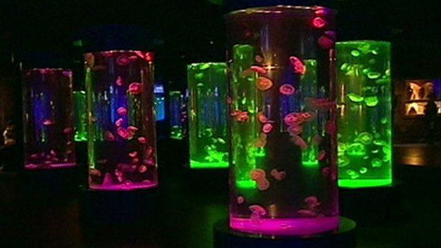 Jellyfish in tanks