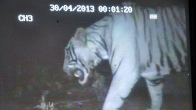 India Nandankanan zoo shut after wild tiger intrusion