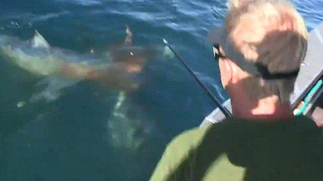 Fisherman watches shark